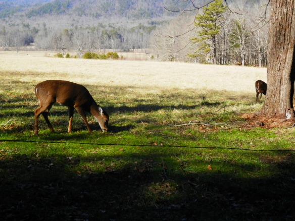 saw some deer!